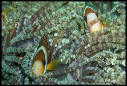 Sulawesi 022
