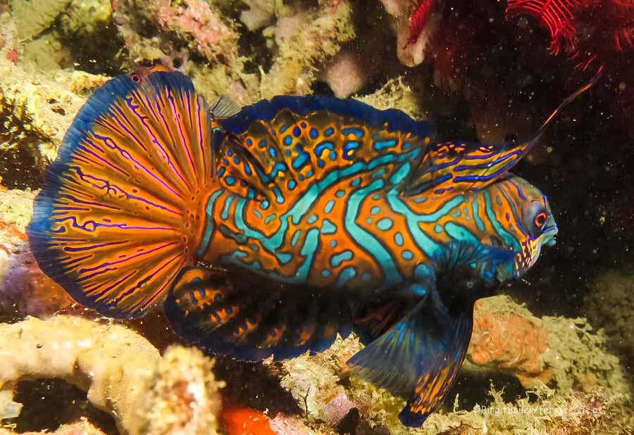 Sulawesi 040