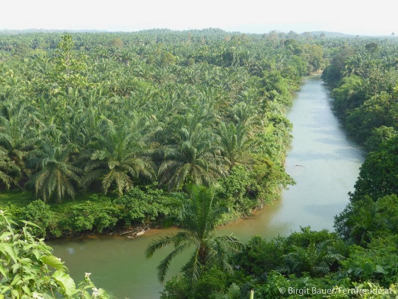Riesige Palmölplantagen