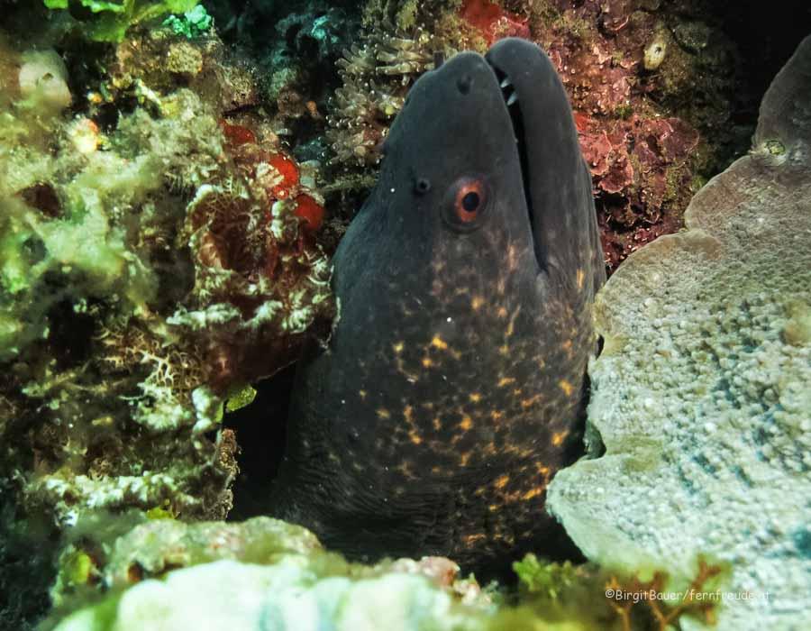 Sulawesi 052