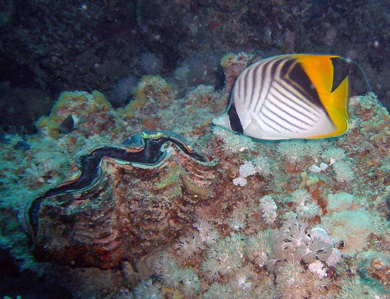 Unterwasser_Ägypten_(59).jpg