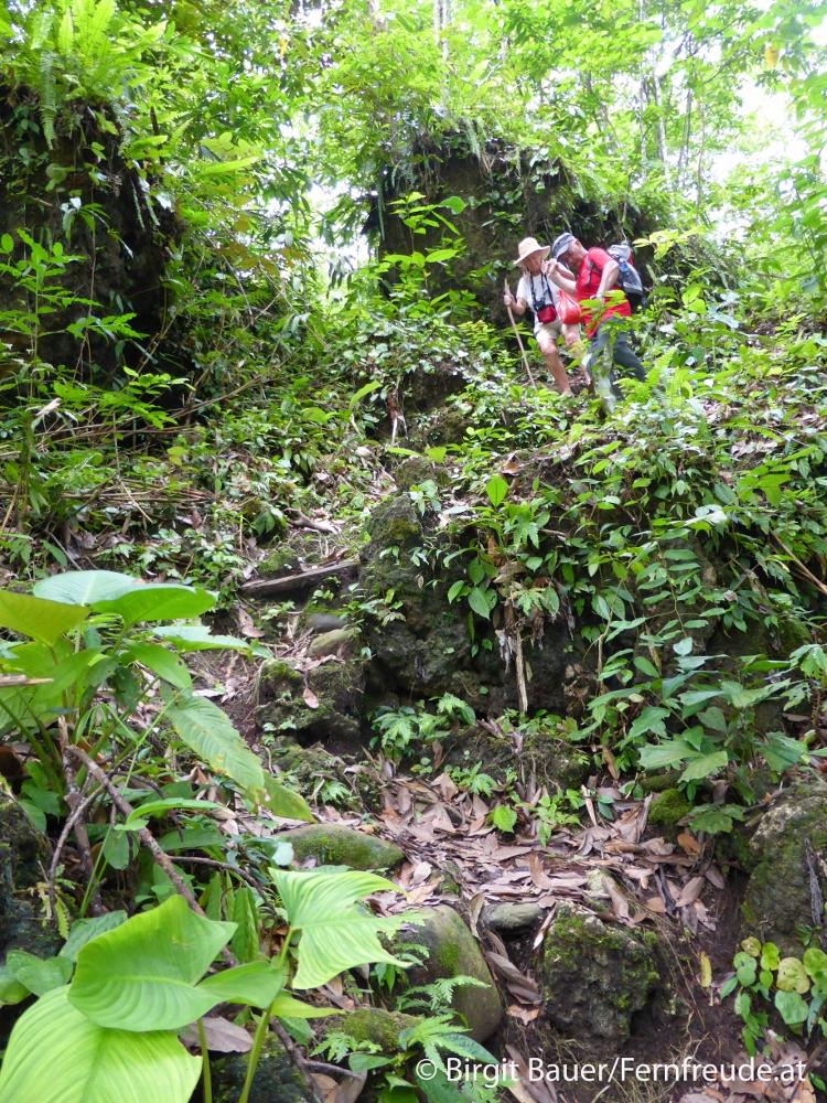 Wanderung durch den Regenwald