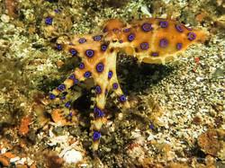 Sulawesi 140