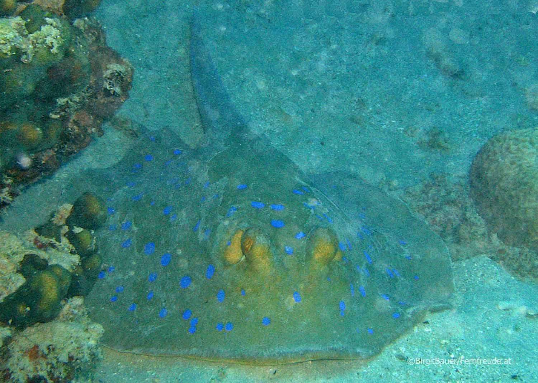 Unterwasser_Ägypten_(91).jpg