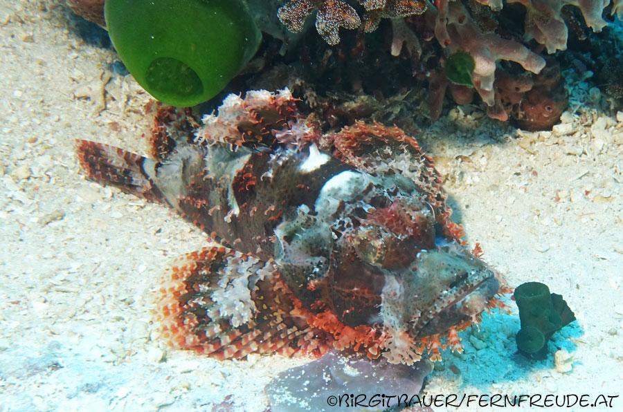 scorpionfish_17