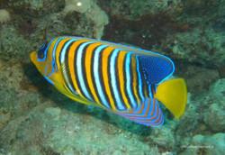 Unterwasser_Ägypten_(99).jpg