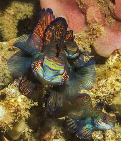 Sulawesi 030