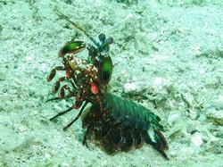 Sulawesi 059