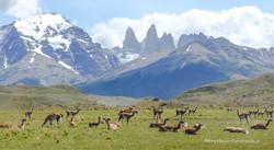 Chile & Argentinien 183