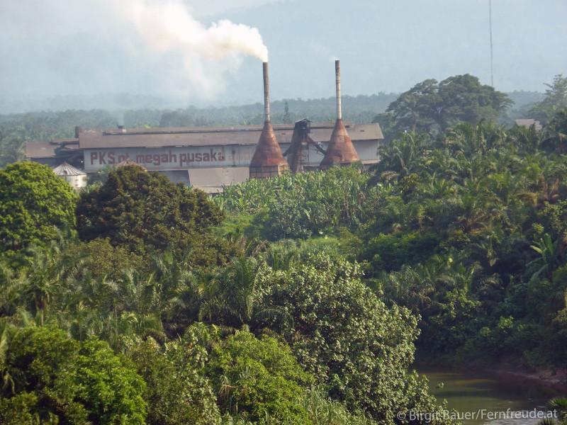 Palmölplantagen mit einer Palmölfabrik