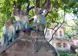 Affentempel von Pulaki