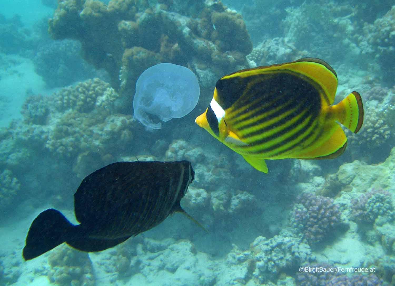 Unterwasser_Ägypten_(78).jpg