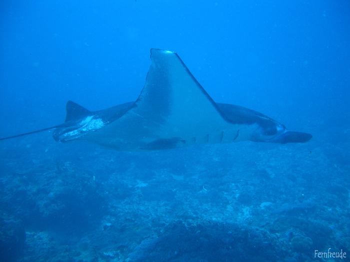Bali Unterwasser