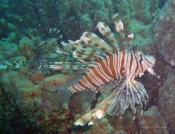 Unterwasser_Ägypten_(53).jpg