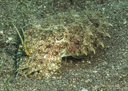 Sulawesi 065