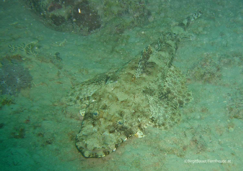 Unterwasser_Ägypten_(75).jpg