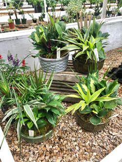 Indoor Plant Arrangements
