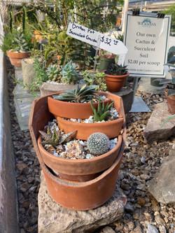 Planted Pot