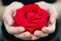Rosa-favorable.jpg