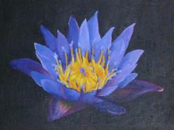 Lotus, 2008