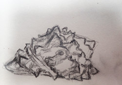 shell study conch