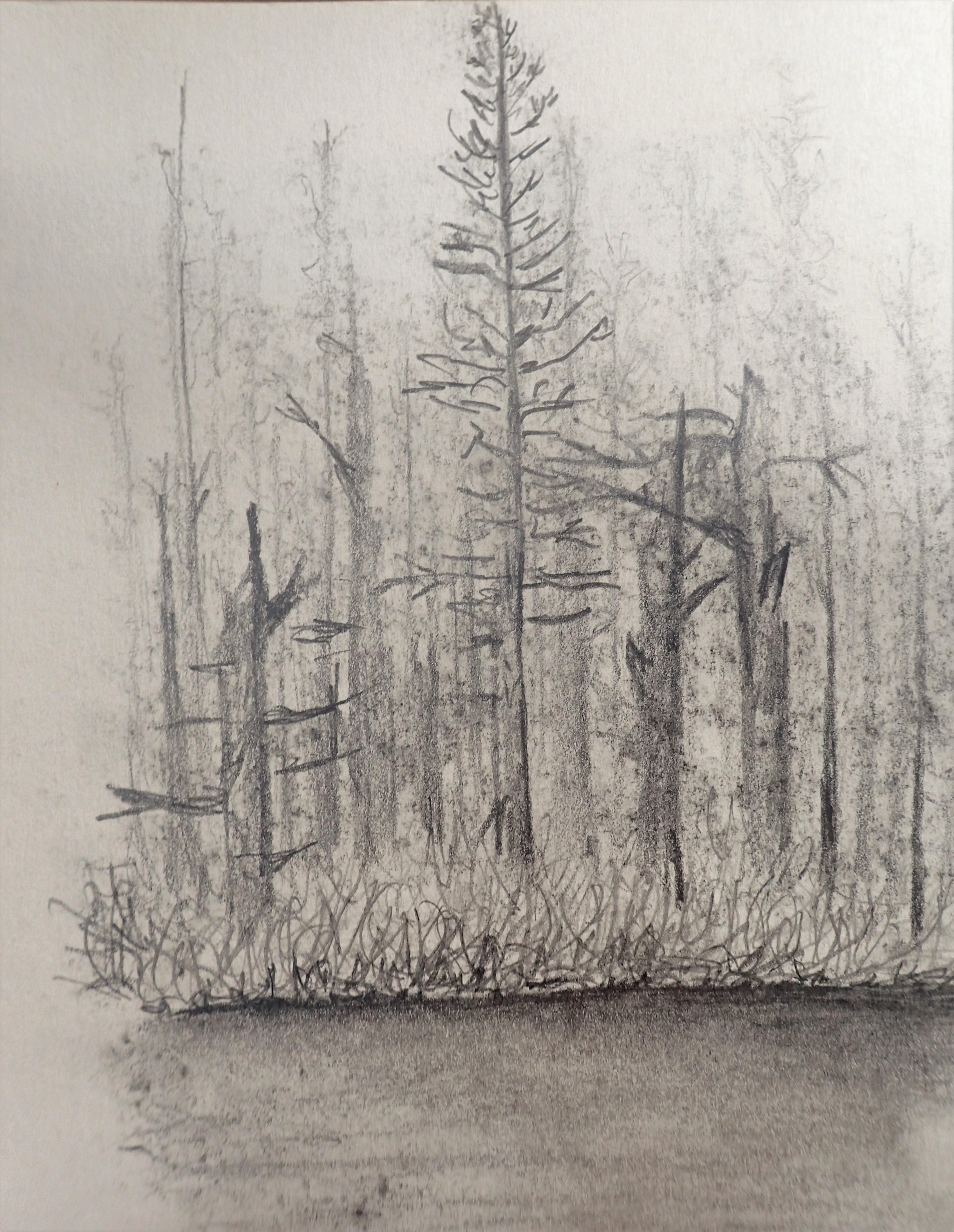 graphite study shoreline