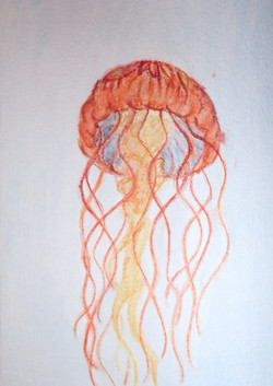 Jelly, watercolors, 2017