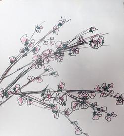 line study cherry blossoms