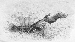 23 de Maio e a Tartaruga
