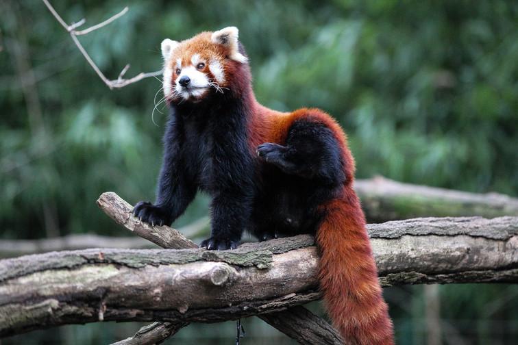 small panda duisburg .jpg