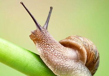 snail3_sprava-1.jpg