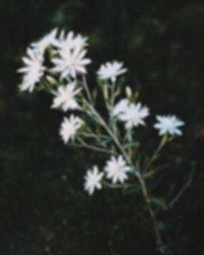 Bloom, baby..jpg