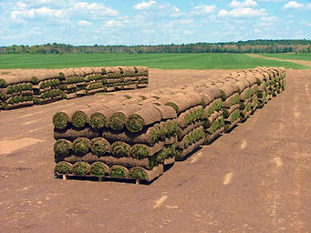 Harvesting, Sod, trucking 013.jpg