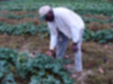 Mr. Hooks showing kale plants.jpg