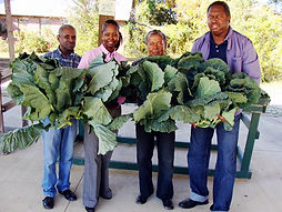 Holding Collards_edited.JPG