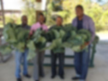 Collards Big.JPG