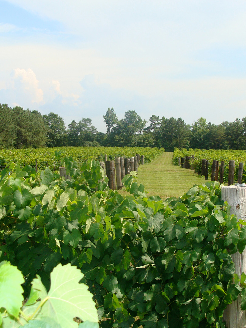 Whippoorwill Vineyards
