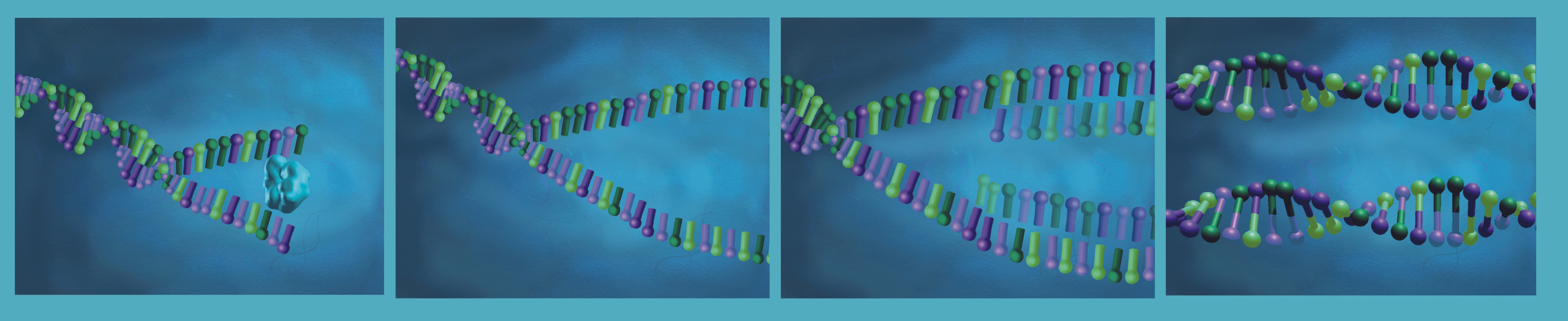 DNA Replication Panel for an Interactive Application