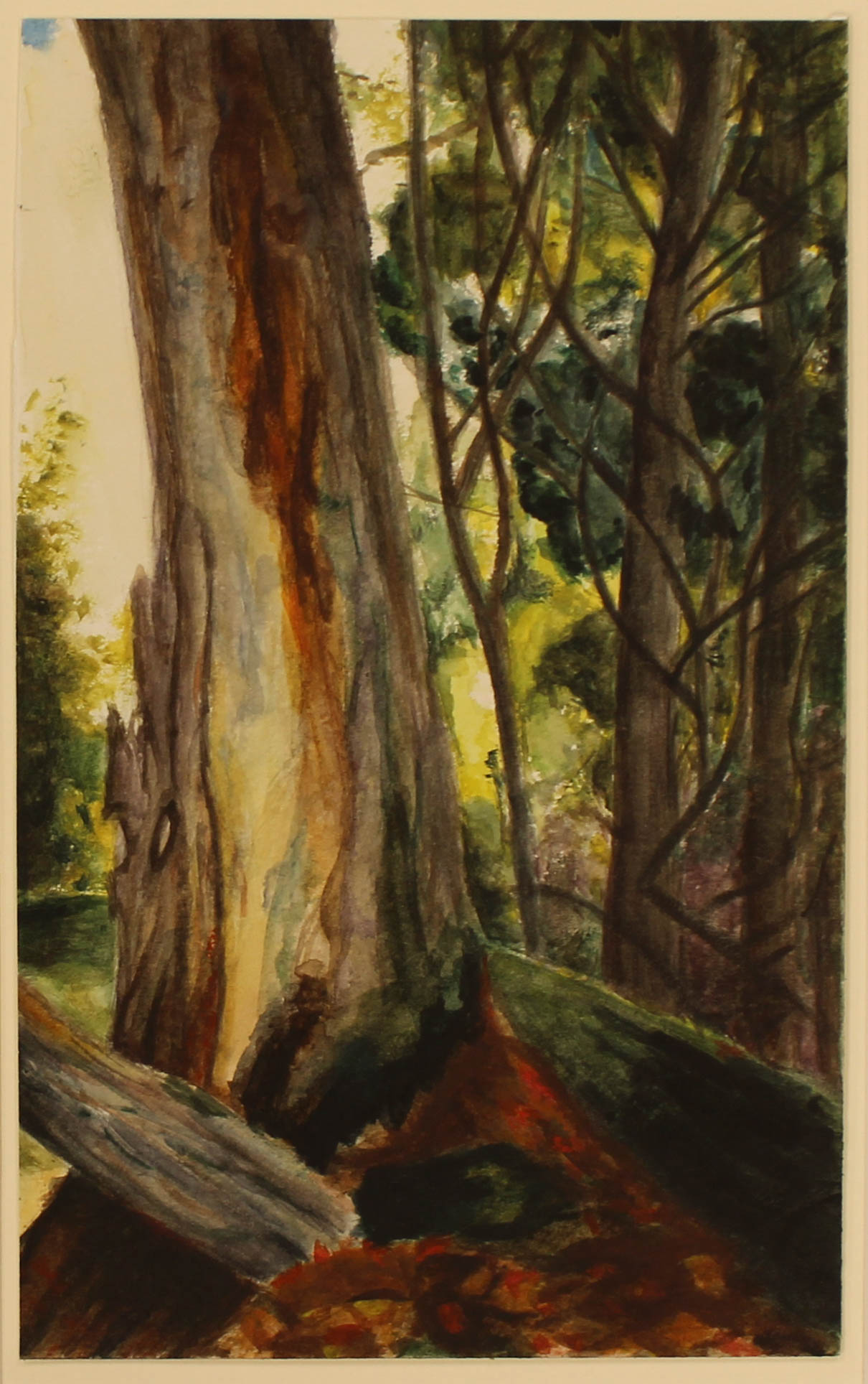 Woods Watercolor