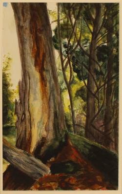 Woods Watercolor
