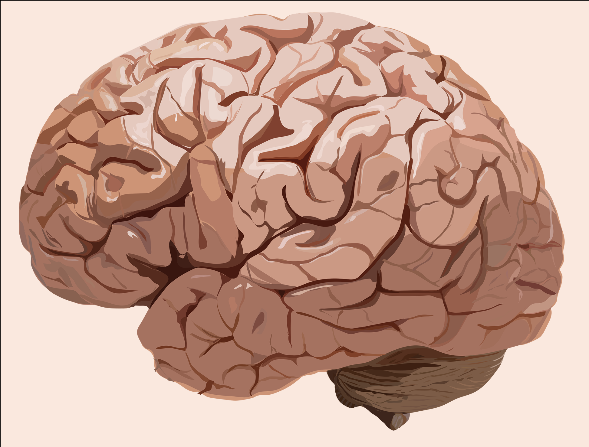 Brain Illustration for Patient Infographic