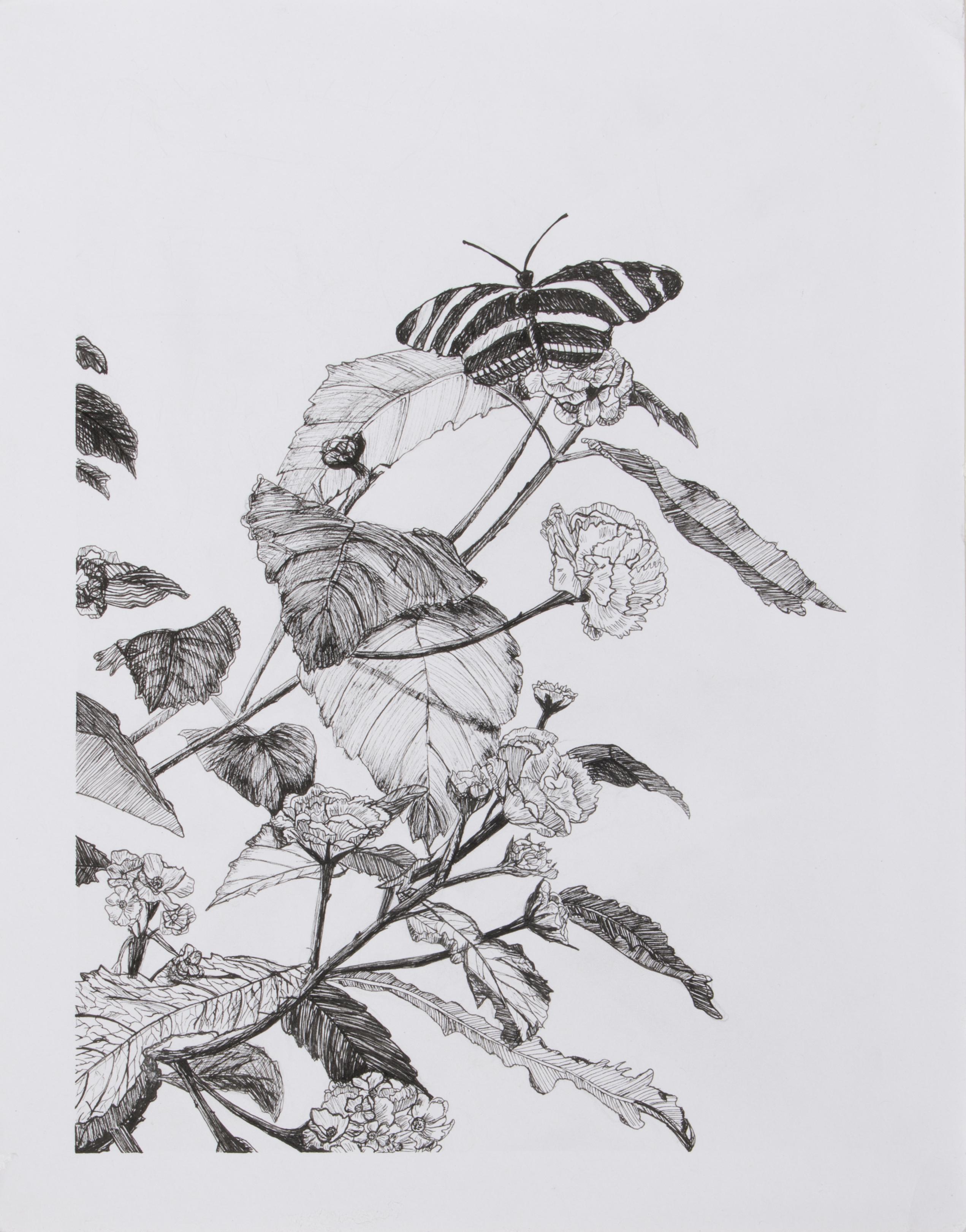 Botanical Garden Sketch