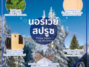สนนอร์เวย์สปรูซ สนขาวอีกหนึ่งชนิดที่SAK WoodWorksคัดสรรมาให้กับคุณ
