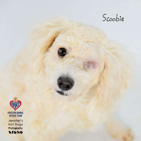 Scoobie