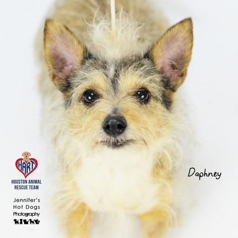 Daphney