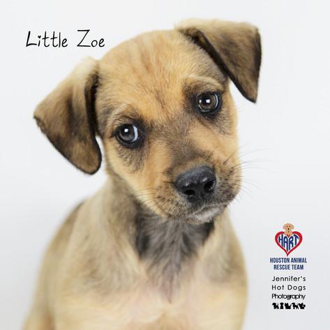 Little Zoe