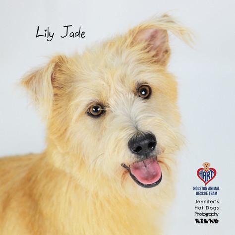 Lily Jade-