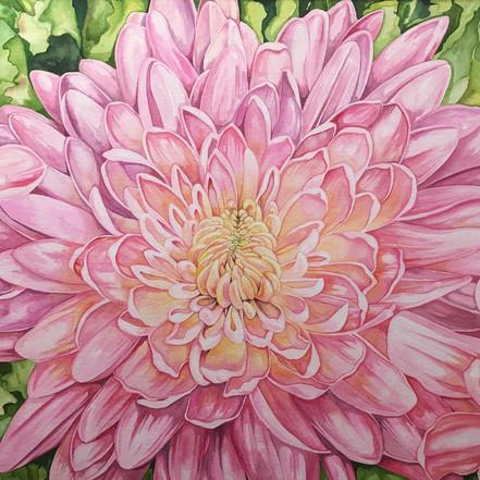 Double-Spray Pink Chrysanthemum