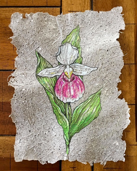 Lady Slipper on Banana paper