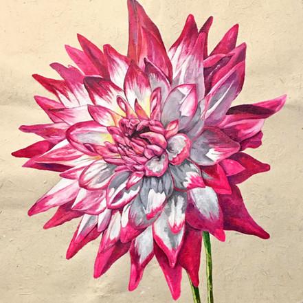 Hayley Jane Semi-cactus Dahlia